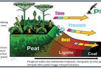 proses pembentukan batubara